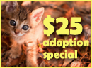 Fall for a Feline $25 Adoption Special