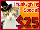 A Month of Thanksgiving & $25 Cat Adoptions
