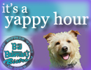 It's a Yappy Hour!