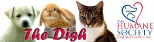 The Dish Masthead