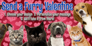Send a Furry Valentine's Day Postcard