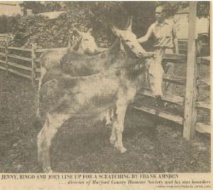 1975 - Donkeys