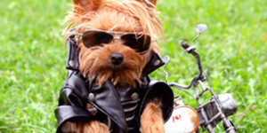 Wags & Tags Rescue Ride: Poker Run & Chili Cook-Off