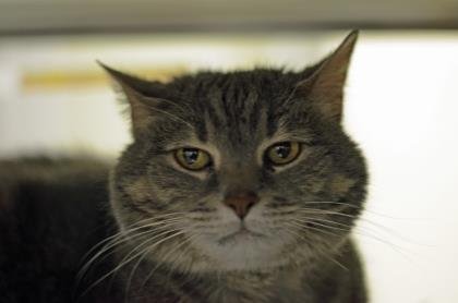ANABELLE, 12-YEAR-OLD FEMALE