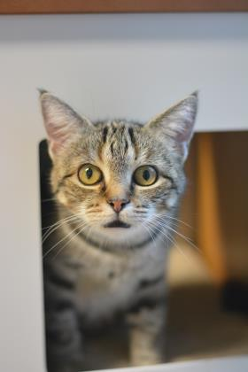 COCONUT: 7-YEAR-OLD FEMALE