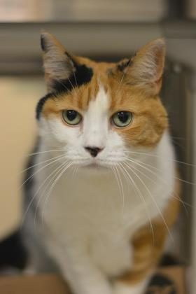 COOKIE: 11-YEAR-OLD FEMALE
