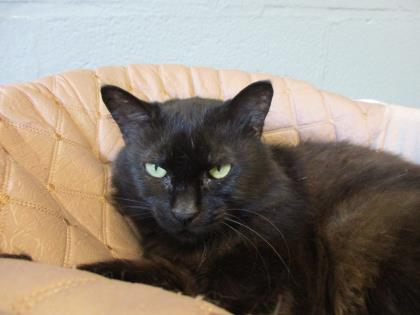 FLUFFY CAT: 9.5-YEAR-OLD FEMALE