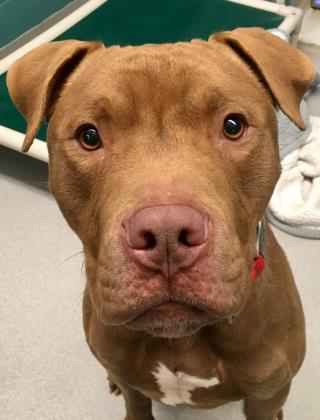 JESTER: 1-YEAR-OLD MALE