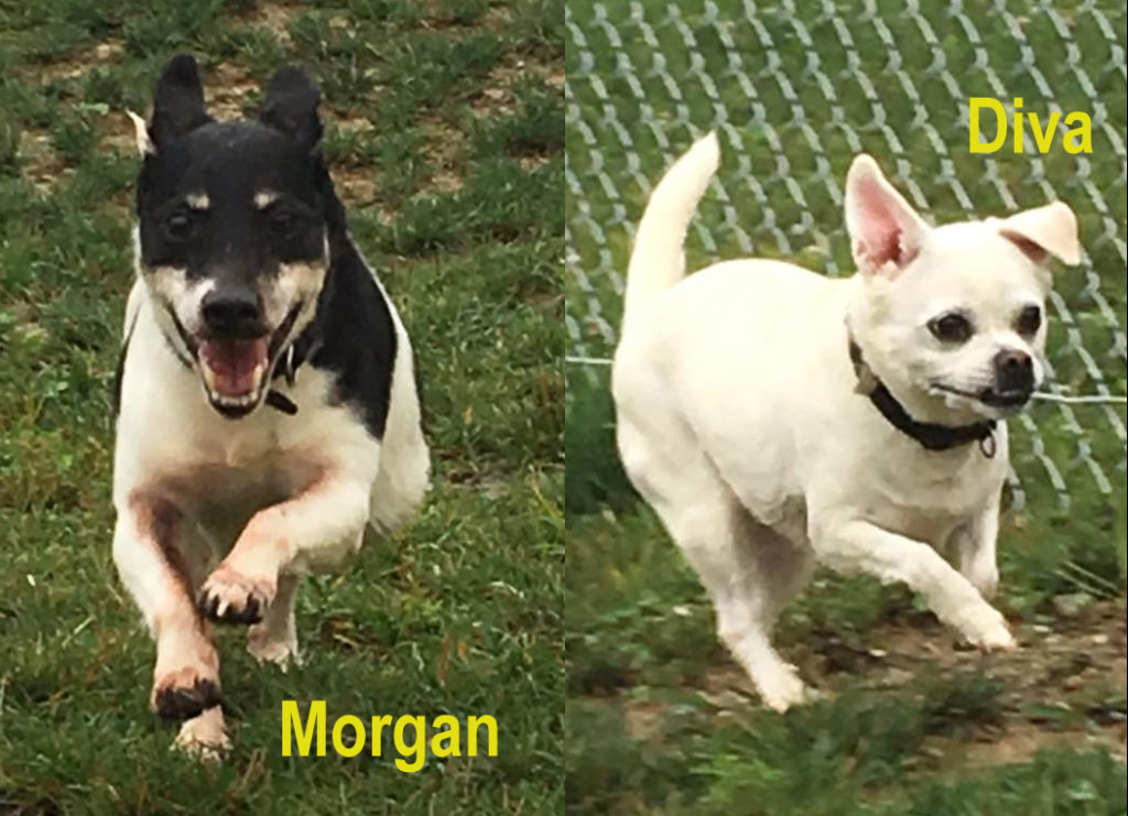 MORGAN, 7-YEAR-OLD MALE & DIVA, 5-YEAR-OLD FEMALE