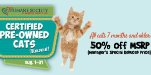 Certified, Pre-Owned Cats