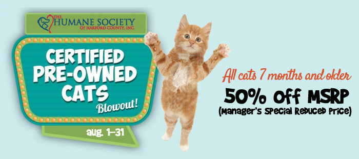 certified pre owned cats the humane society of harford county. Black Bedroom Furniture Sets. Home Design Ideas