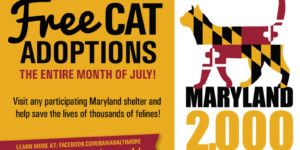 The Humane Society of Harford County Joins Race to Save Lives of Maryland's Felines