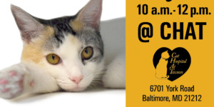Maryland 2000 Cat Adoption Event @ CHAT