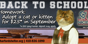 Your September Homework Assignment: Adopt a Cat!
