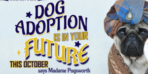 Dog Adoption is in Your Future