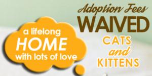 FREE Cat Adoptions