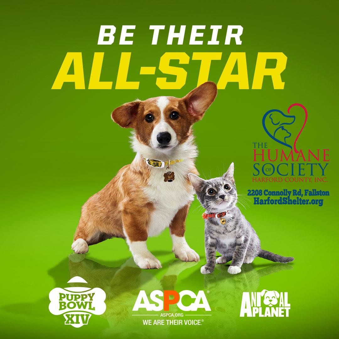 Md Dog Adoption Events