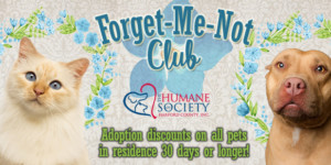 The Forget-Me-Not Club
