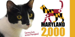 The Humane Society of Harford County Racing to Save Lives of Maryland's Felines