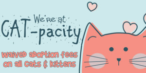 We're at Cat-Pacity!!