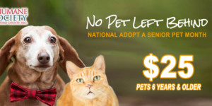 No Pet Left Behind November