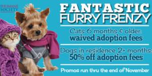 Fantastic Furry Frenzy