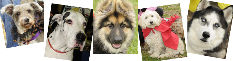 Walk Wag A Thon And Pet Fair With The New Furry Friends 5k