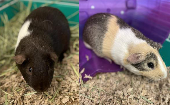 KITKAT & REESE: 6-MONTH-OLD MALES