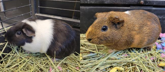 THELMA & LOUISE: 1-YEAR-OLD FEMALES
