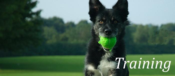 Dog Training The Humane Society Of Harford County