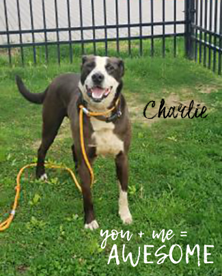 CHARLIE: 7-YEAR-OLD MALE
