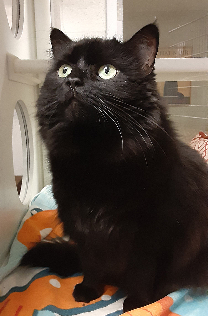 FIONA: 2-YEAR-OLD FEMALE