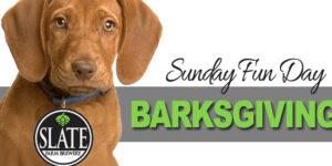 BarksGiving