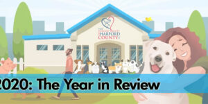 The Humane Society of Harford County Releases 2020 Report Card